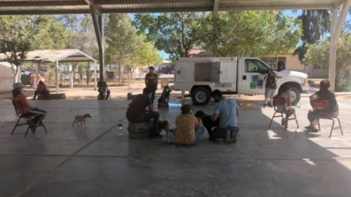 Fundación Pata de Perro lamenta que Salud les niegue quirófano para esterilizaciones
