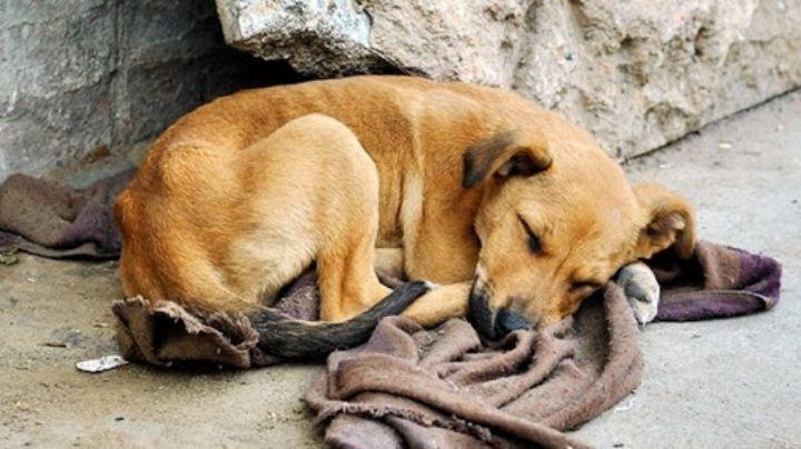 ¡Alerta! Denuncian a esta zona de Ecatepec como una donde se envenenan perros