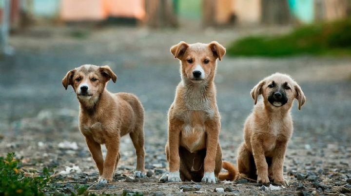 Mascotas: ¡Más tierno, imposible! Descubre algunos adorables nombres para perros
