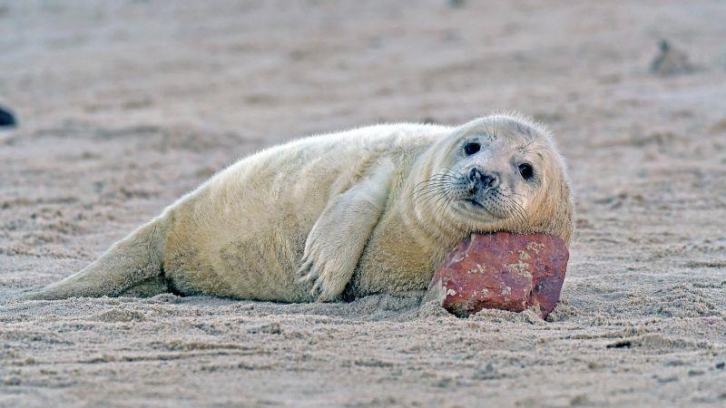 VIDEO:  Una foca bebé toma su primera clase de natación y enamora a todo Twitter