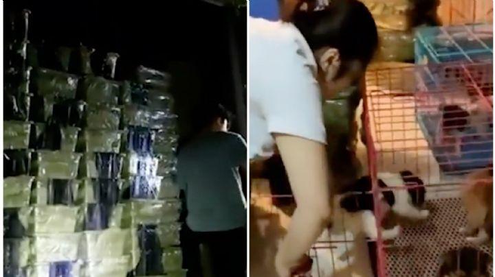 Macabro: Hallan 160 'cajas sorpresa' en China; contenían animales muertos y en agonía