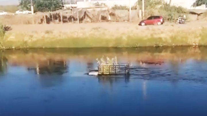 Se precipita automóvil a las aguas del Canal Bajo en Cajeme; habría sido provocado