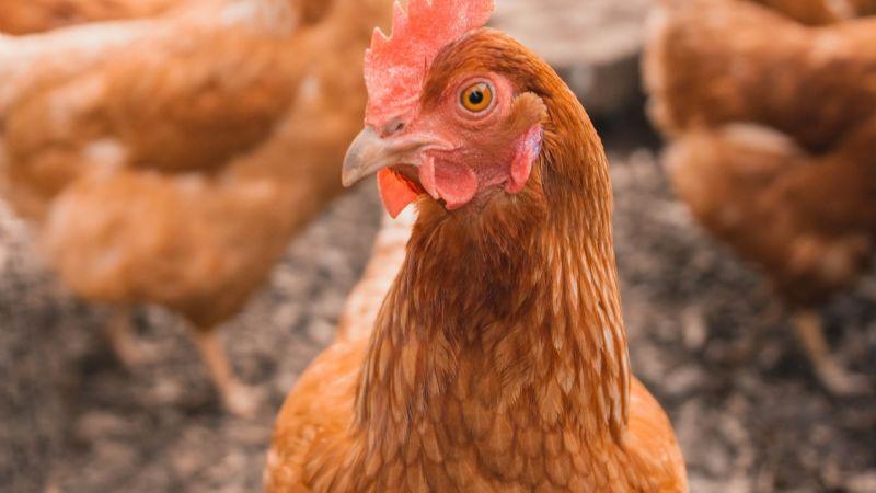 ¿Nueva pandemia? Por primera vez, China registra un hombre contagiado de gripe aviar H10N3