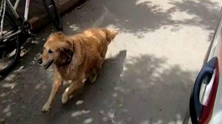 VIDEO: ¡Siempre amigos! Perrito persigue una ambulancia para acompañar a su dueña enferma