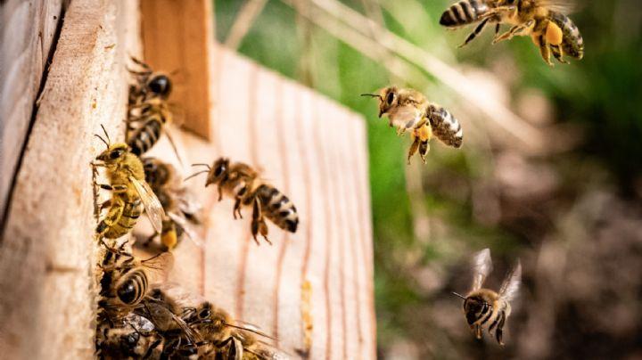 Terrible: Tras choque vehicular, fallecen 3 personas; sobrevivientes son atacados por abejas