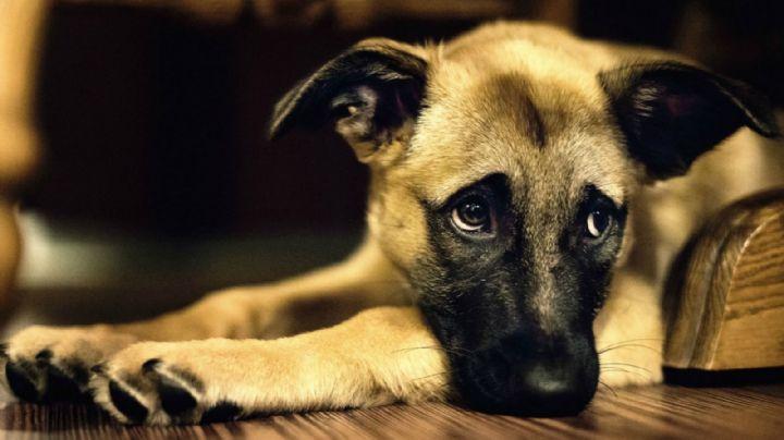 Asesina al perro de su exnovia; le prometió que si no regresaban lo apuñalaría