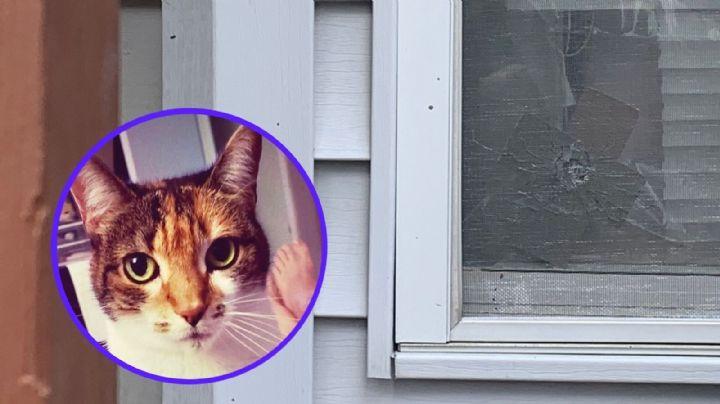 Gatito es asesinado a balazos por sujetos que abrieron fuego contra una vivienda