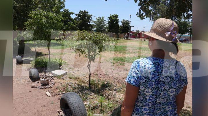 Cajeme: Vecinos de Las Misiones toman acciones propias para cuidar la reforestación en parques