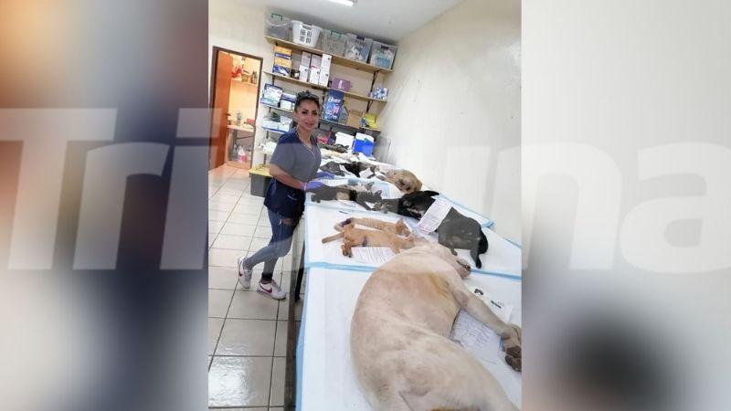 Animalistas en riesgo de quedarse sin jornadas de esterilización en Guaymas