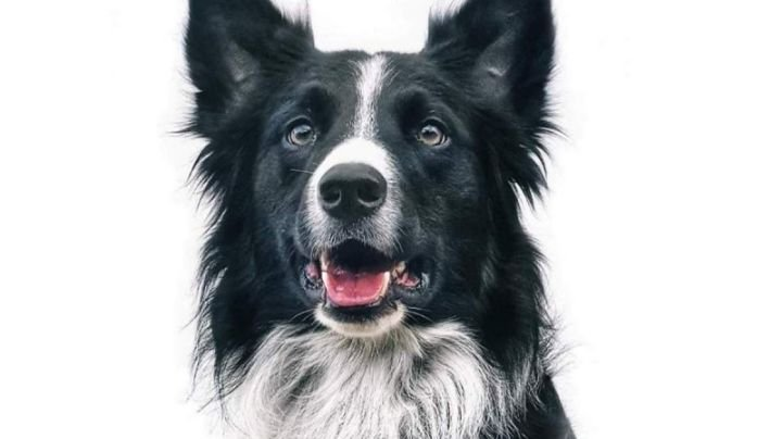 Cruz Roja busca promover la Ley Athos; tendría penas más severas contra el maltrato animal