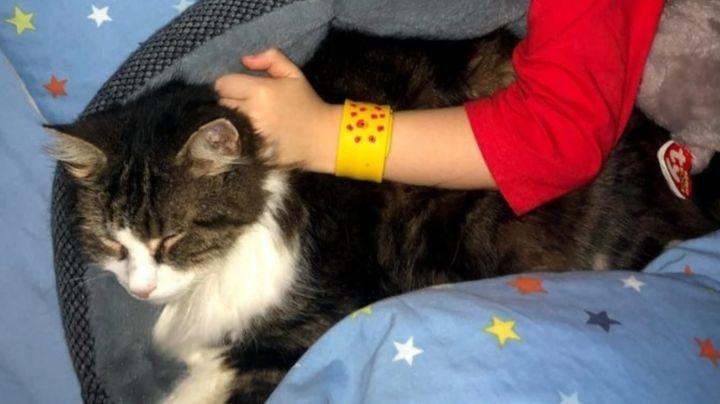 ¡Sí tienen 7 vidas! Gato vuelve a casa después de que su familia creyera que lo incineraron
