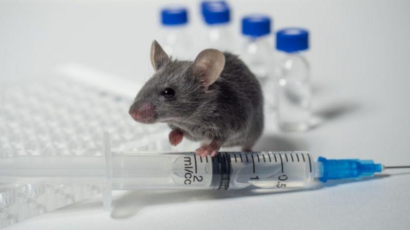 ¡Buenas noticas! Vacuna de ARNm muestra efectividad contra la Malaria