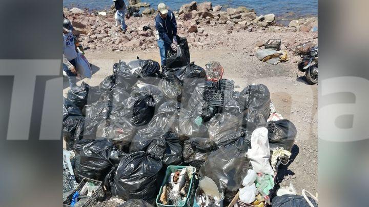 Ambientalistas del Puerto Guaymas buscan rescatar el ecosistema de la contaminación