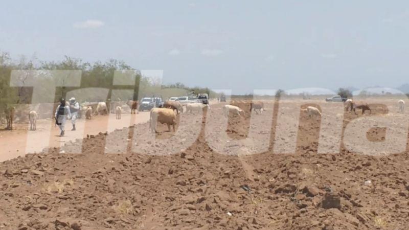 Sonora: Con el 'tiro de gracia', sicarios ejecutan a trabajador agrícola en el Valle de Empalme
