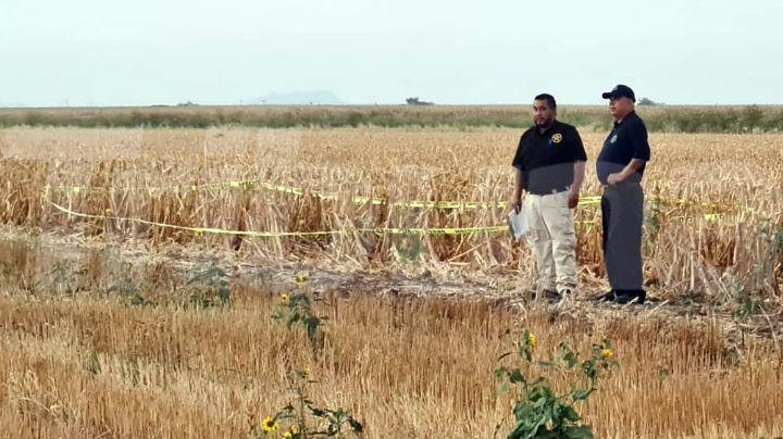 Cajeme: Localizan cadáver putrefacto en medio de campo agrícola del Valle del Yaqui