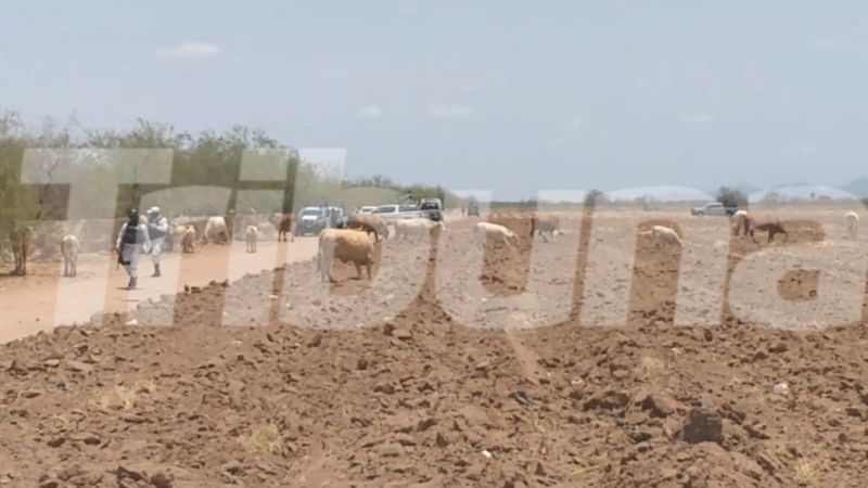 Sonora: Identifican a joven asesinado por sicarios en campo agrícola; es hijo de un policía