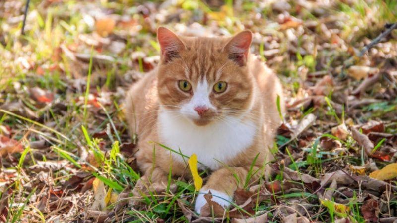 Consigue dar un paseo con tu gato gracias a estos sencillos consejos