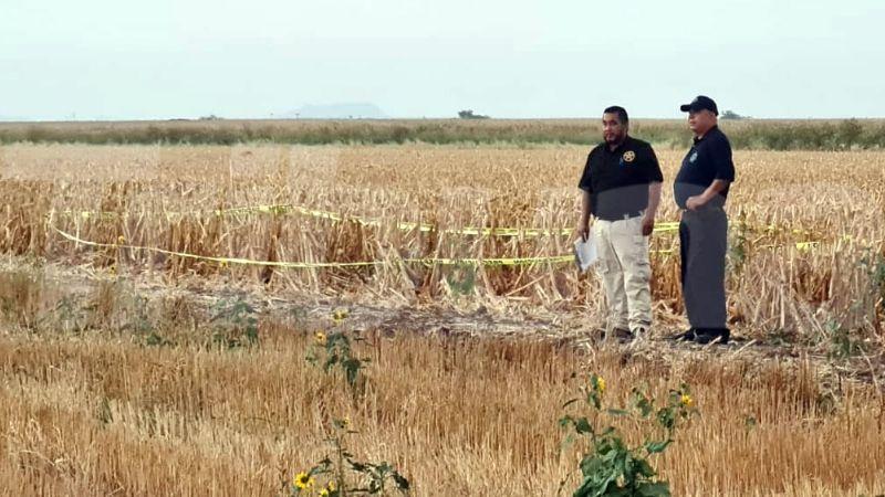 Bácum: Localizan cadáver putrefacto en medio de campo agrícola del Valle del Yaqui