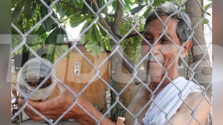 Ciudad Obregón: Vecinos de la colonia Benito Juárez reportan aumento en la presencia de alacranes