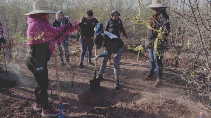 Colectivos rastreadores se unen e Inician mega búsqueda de desaparecidos en Cajeme