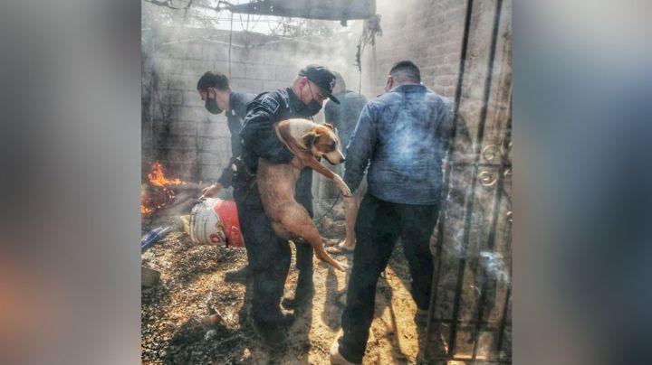 En Hermosillo, policías estatales le salvan a la vida a un perro tras incendio en domicilio