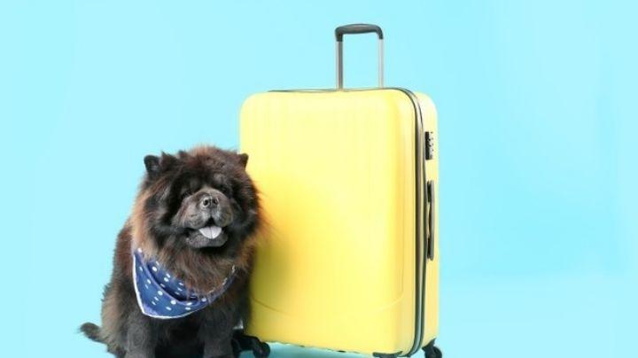 Lleva de viaje a tu mascota con estos nombres para perros inspirados en destinos turísticos