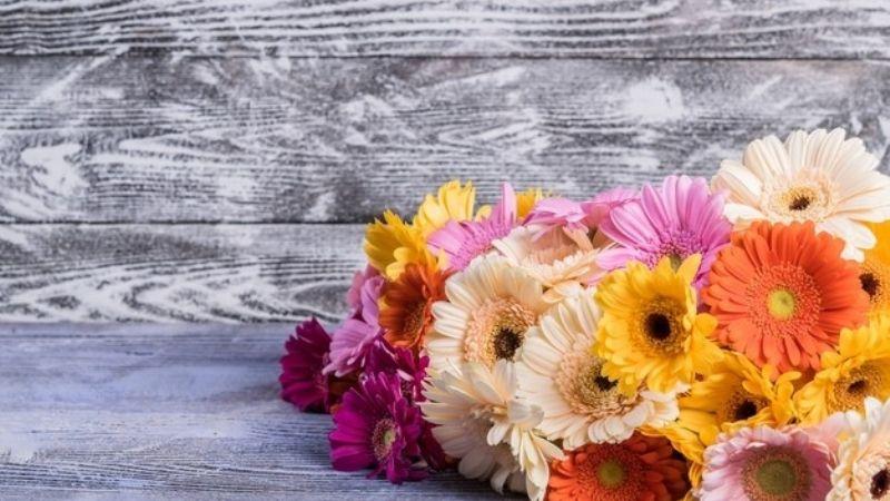 Descubre los maravillosos usos de la gerbera y enamórate de estas coloridas flores