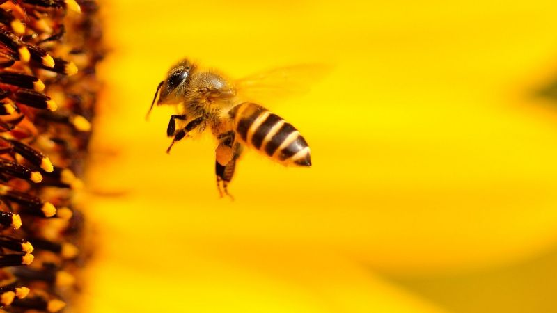 VIDEO: Una mujer retira un panal de abejas sin usar ningún tipo de protección