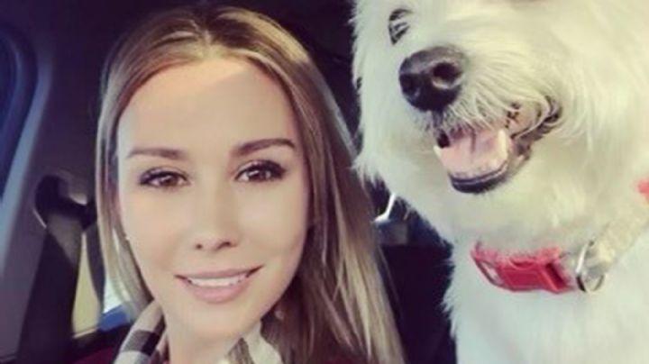 Dos perros enormes lastiman a una mujer y matan a una mascota en una serie de ataques