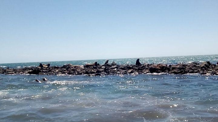 Mares, playas y océanos sonorenses, fuente de riqueza marina que deben ser cuidados