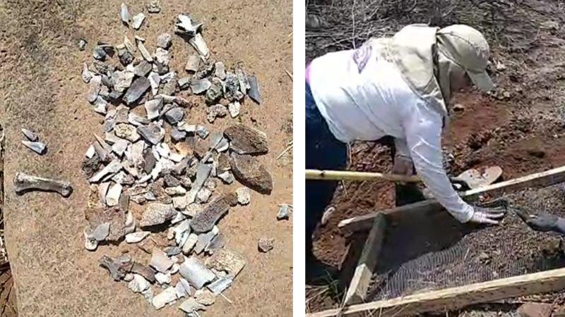 Macabro hallazgo en Navojoa: Encuentran restos humanos sepultados en terreno baldío