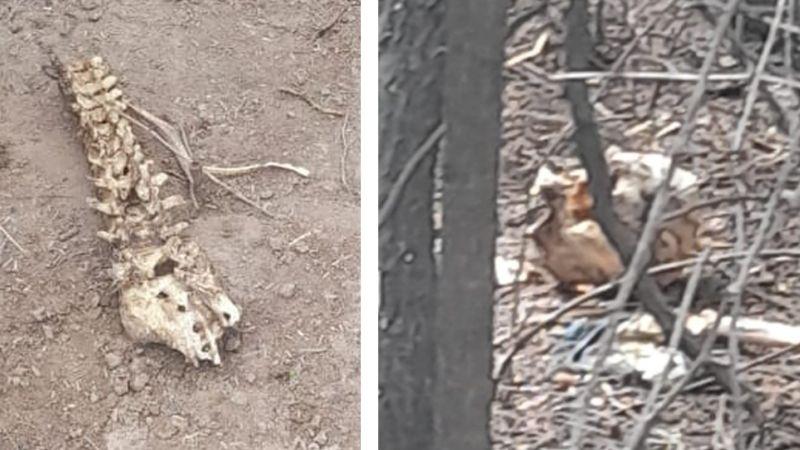 Escalofriante: Vecinos descubren huesos humanos junto a camino de terracería en Cajeme