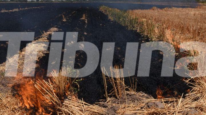 Quema de gavilla persiste en Cajeme; se han aplicado 6 sanciones a responsables