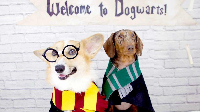 Deja que la magia invada a tu perro con estos nombres inspirados en famosos magos y brujas