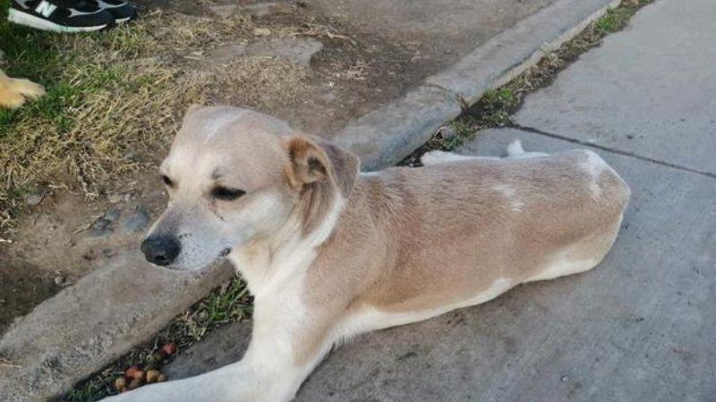 Servidor de la nación: Policía salva a un perrito malherido y se hace viral en redes sociales