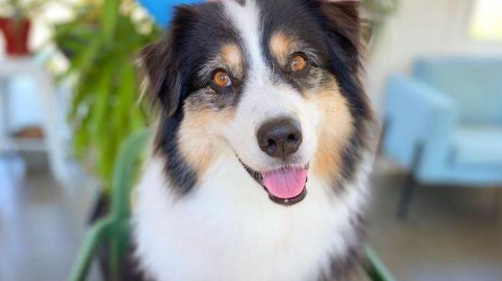 VIDEO: ¡Impactante! Un perro enamora a Internet al pintar un óleo de flores con su hocico