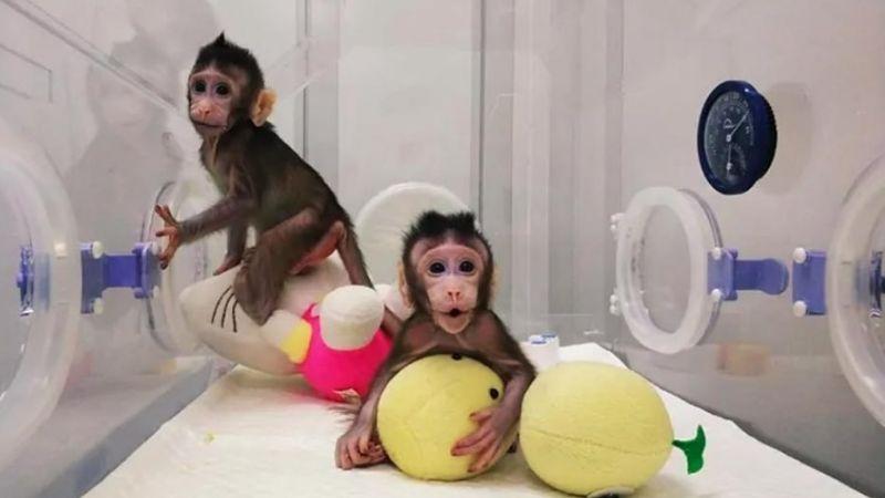 Virus del mono B: China confirma el primer deceso humano; fue un veterinario de 53 años