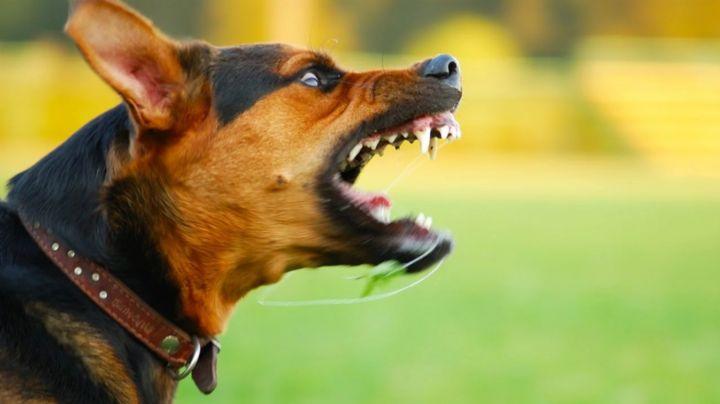 FUERTES IMÁGENES: Una jauría de perros ataca a Iván y a Saúl; uno está herido y el otro falleció
