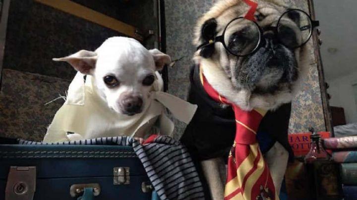 ¿Amas la lectura? Entonces estos nombres para perros inspirados en libros te fascinarán