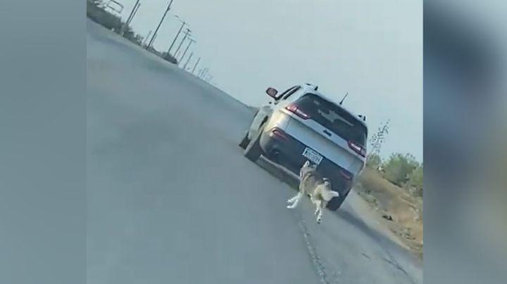 Maltrato animal: Hombre abandona en medio de la carretera a su perro husky; ya fue detenido