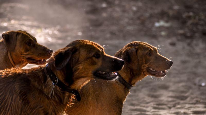¿Adoptaste a un perro color café? Entonces estos tiernos y hermosos nombres son para él