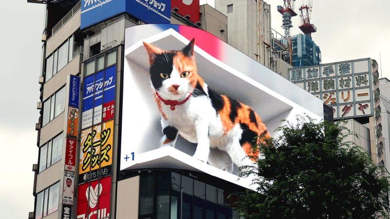 VIDEO: ¡De no creerse! Un gato gigante vaga por las calles de Tokio; enamora a internautas