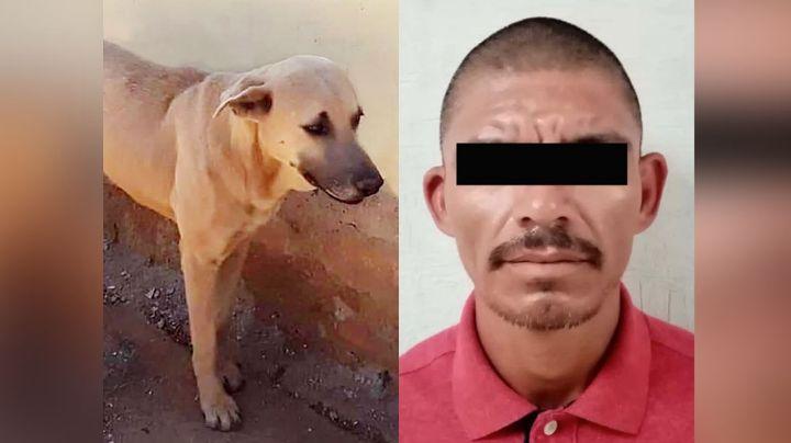 Hermosillo: Cae 'El Choya' por herir de muerte a 'Alonso', un perro de 4 años; lo tuvieron que dormir