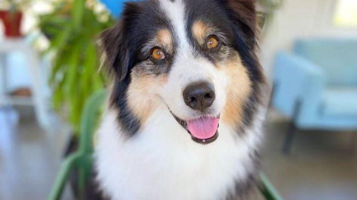 VIDEO: ¡Más tierno, imposible! Este perro conquista a Instagram al cultivar papas con su dueña
