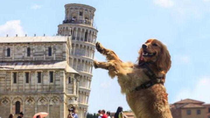 ¡'Mamma mia'! Llama a tu perro de forma original con estos nombres inspirados en Italia