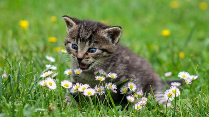 ¡Cuida la salud de tu gato! Descubre cuáles son los alimentos más peligrosos para ellos