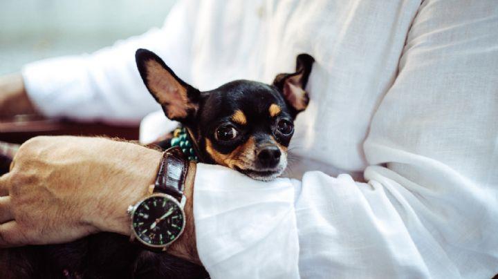 ¿Adoptaste a un perro de raza pequeña? Entonces amarás estos hermosos nombres para tu mascota