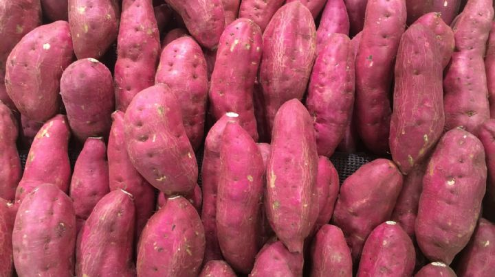 Dulce y nutritivo: Descubre cuáles son los poderosos beneficios que el camote tiene para la salud