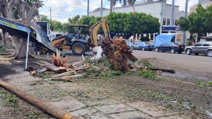 Cajeme: Continúan las afectaciones por la fuerte lluvia en Ciudad Obregón